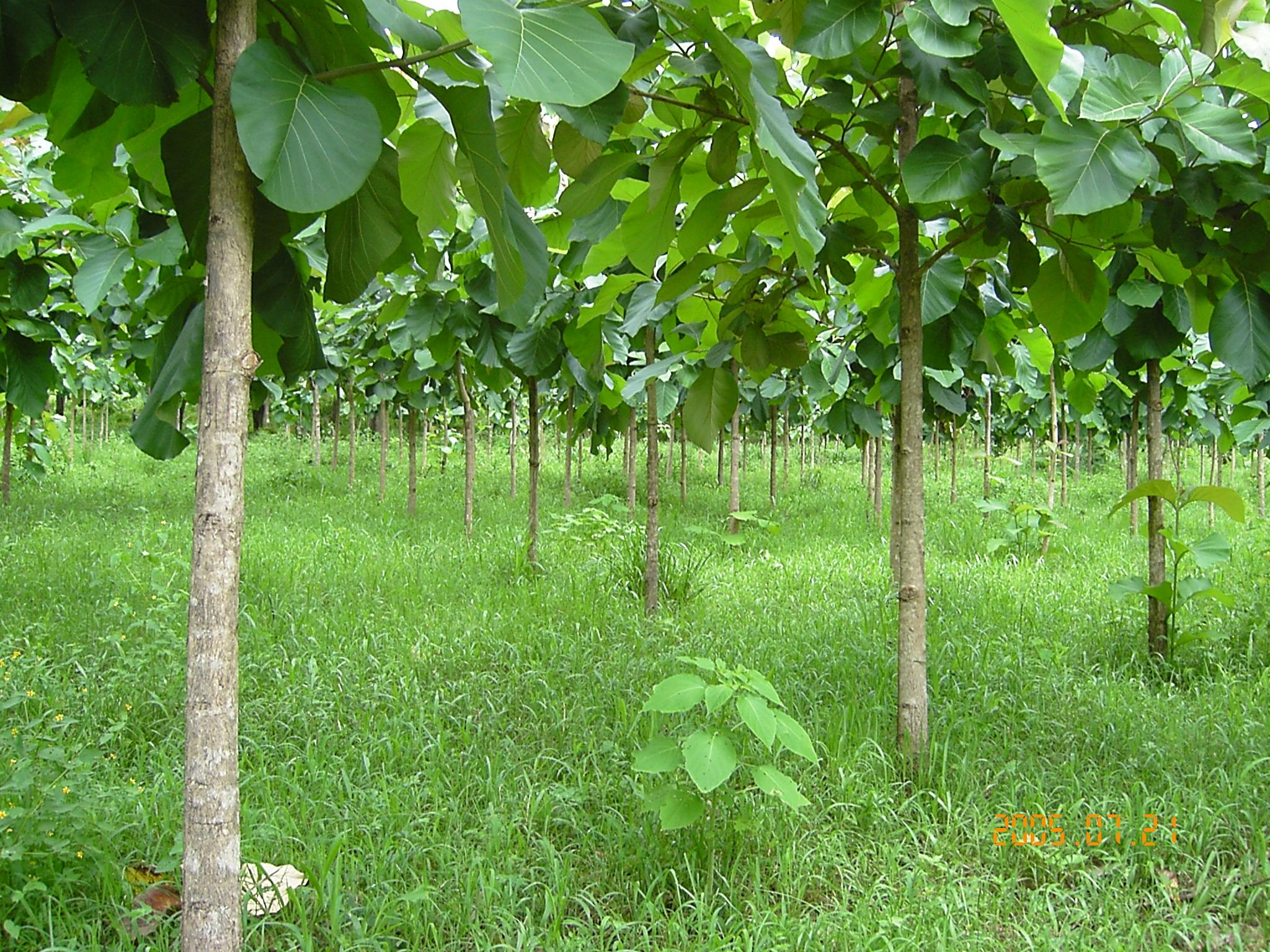 Fonafifo reabre período para optar por PSA en las modalidades de reforestación y SAF