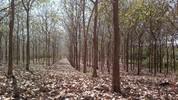 Reserve su espacio para la primera jornada tributaria forestal