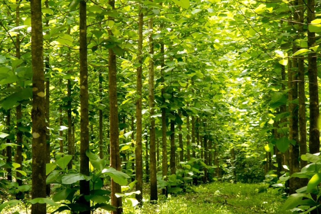 Amplían periodo de reforestación y SAF