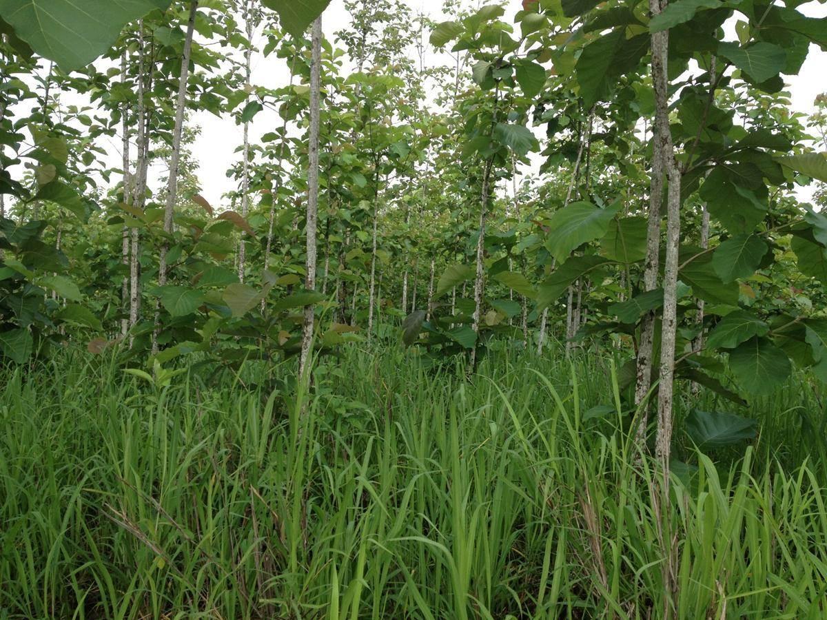 ONF capacitó a organizaciones sobre el control de malezas en plantaciones forestales