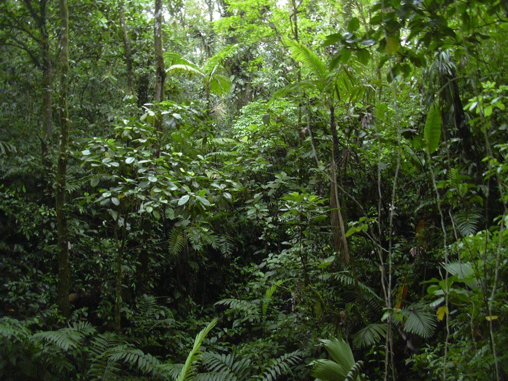Manejo Sostenible de Bosques Naturales